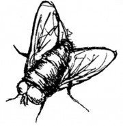 Black Fly Press
